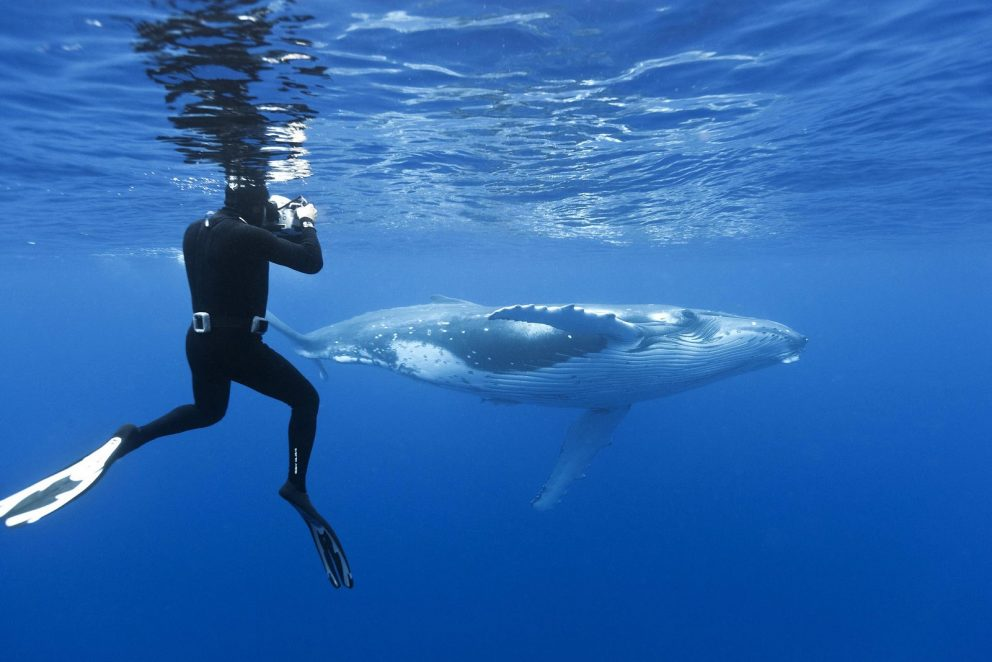 Tichomorský ostrov Tonga alebo potápanie sa s veľrybami