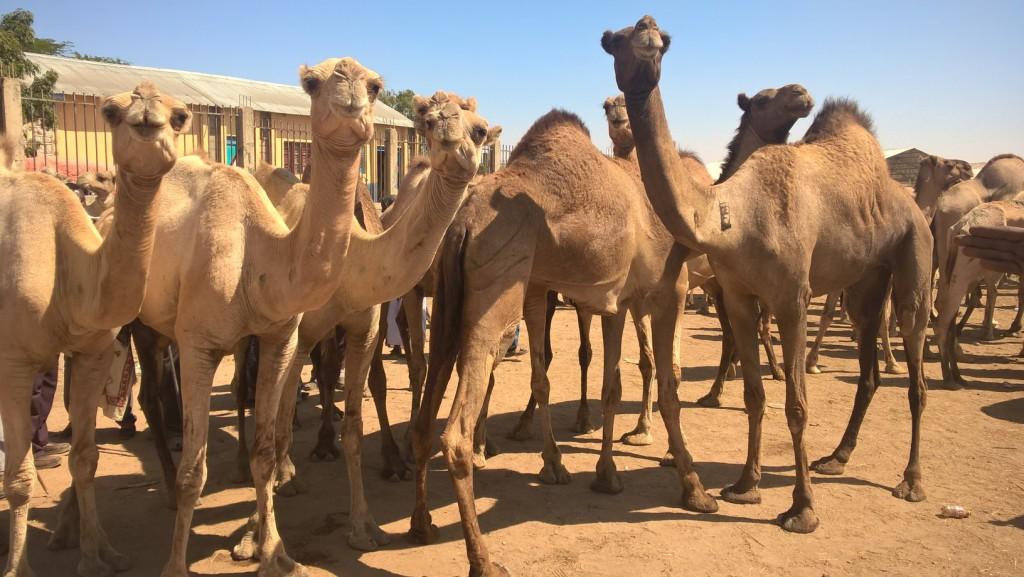 Somálsko alebo ako to tam vyzerá