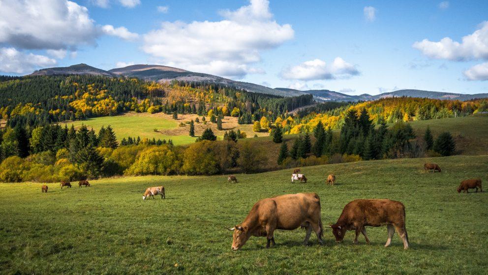 Žilinský kraj - rady, tipy a itinerár