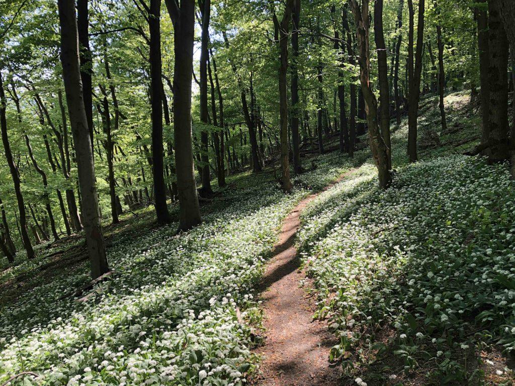 Trasa vedie z väčšej časti bukovým lesom
